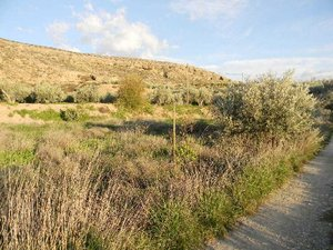 Land for sale in Albox, Almeria