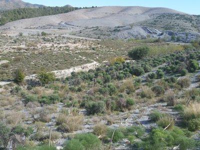 Land te koop in Lorca, Almeria