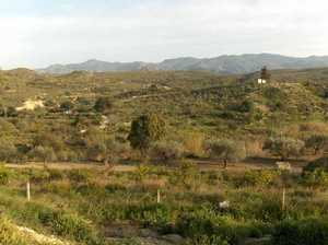 Land for sale in Los Gallardos, Almeria